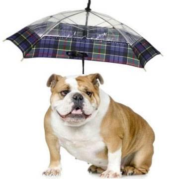 מטרייה לכלבים באתר מרמלדה|צילום: באדיבות אתר מרמלדה